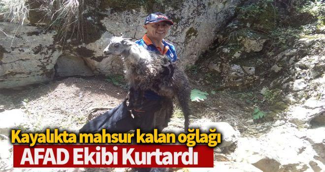 Kayalıkta mahsur kalan oğlağı AFAD ekibi kurtardı