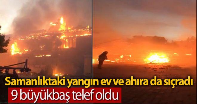 Samanlıktaki yangın ev ve ahıra da sıçradı; 9 büyükbaş telef oldu