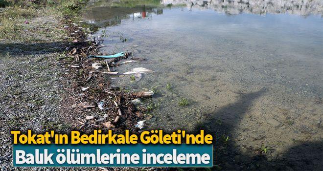 Tokat'ın Bedirkale Göleti'nde, balık ölümlerine inceleme