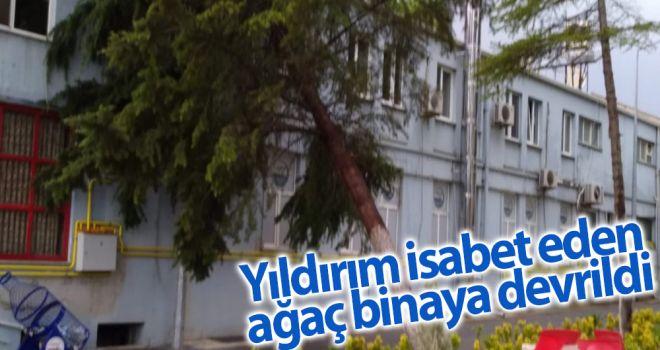 Yıldırım isabet eden ağaç binaya devrildi