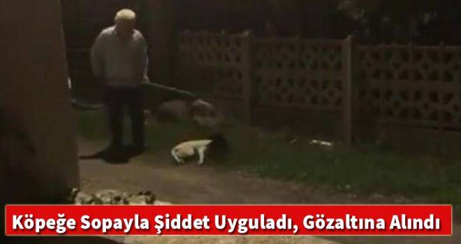 Köpeğe sopayla şiddet uyguladı, gözaltına alındı
