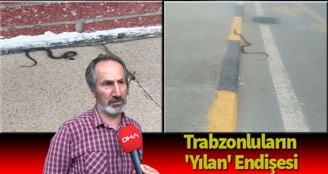 Trabzonluların 'yılan' endişesi