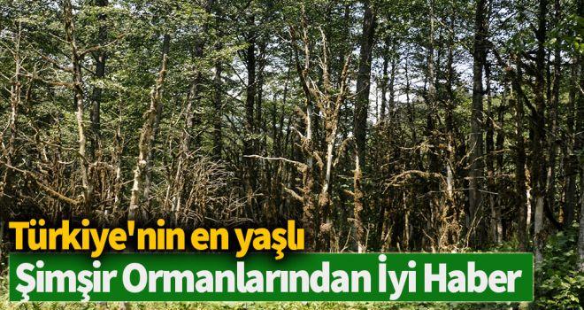 Türkiye'nin en yaşlı şimşir ormanlarından iyi haber