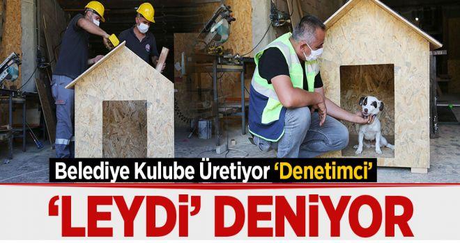 BELEDİYE ÜRETİYOR MASKOT 'LEYDİ' TEST EDİYOR Köksal ÖNER