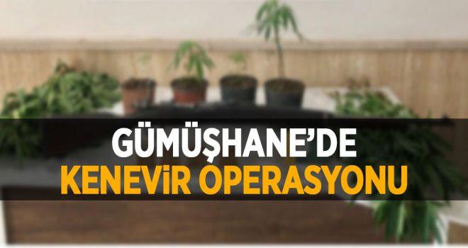GÜMÜŞHANE'DE KENEVİR OPERASYONU