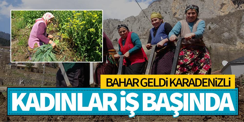BAHA GELDİ, KARADENİZLİ KADINLAR TARLALARDA
