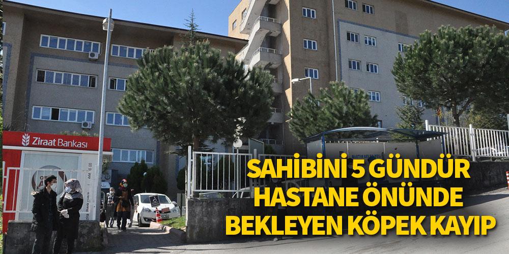 Sahibini 5 gündür hastane önünde bekleyen köpek kayıp