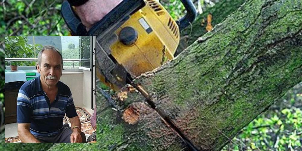 Kestiği ağacın altında kalıp öldü