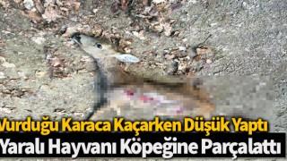 Vurduğu karaca kaçarken düşük yaptı, yaralı hayvanı köpeğine parçalattı