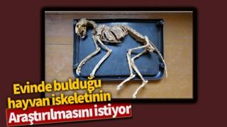 Evinde bulduğu hayvan iskeletinin araştırılmasını istiyor