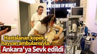 Hastalanan köpek, hayvan ambulansıyla Ankara'ya sevk edildi