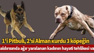 Köpeklerin saldırısında ağır yaralanan kadının hayati tehlikesi var