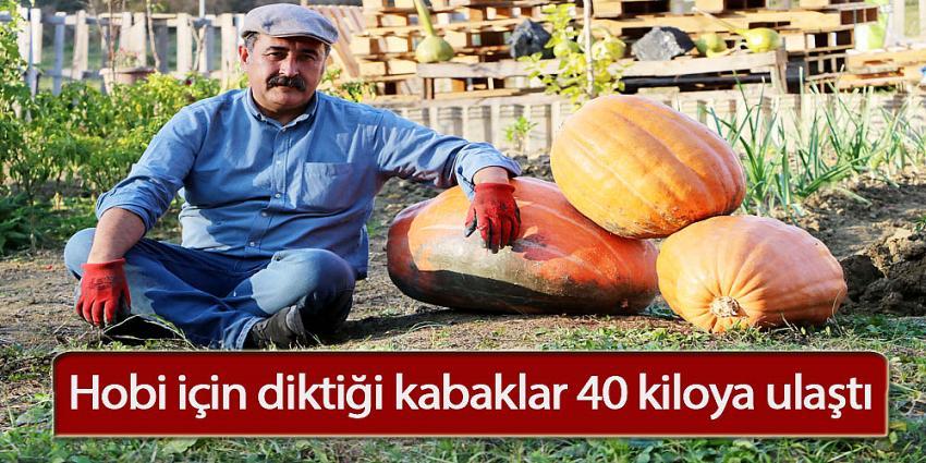 Hobi için diktiği kabaklar 40 kiloya ulaştı