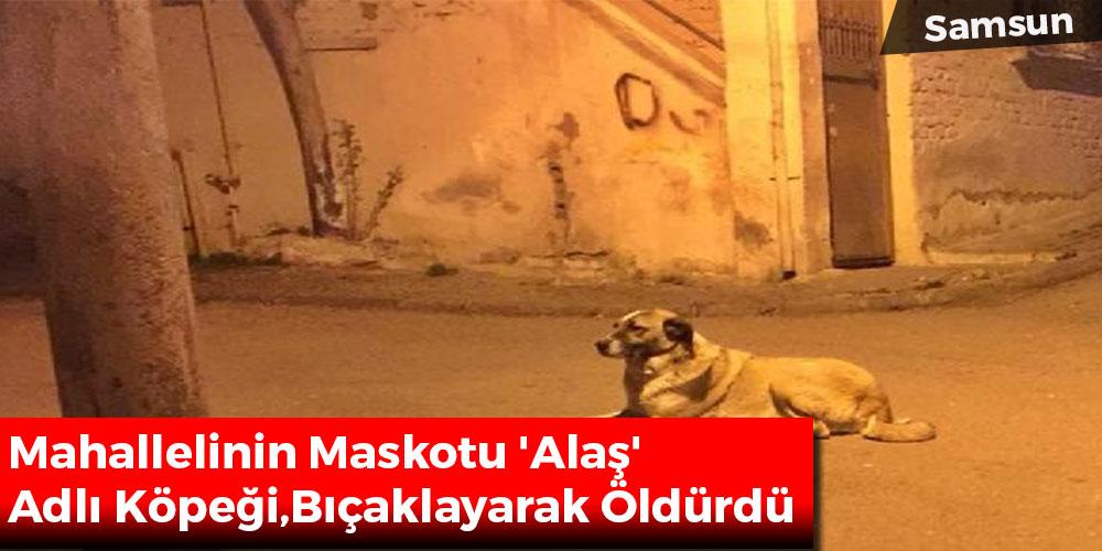 Mahallelinin Maskotu 'Alaş' Adlı Köpeği, Bıçaklayarak Öldürdü