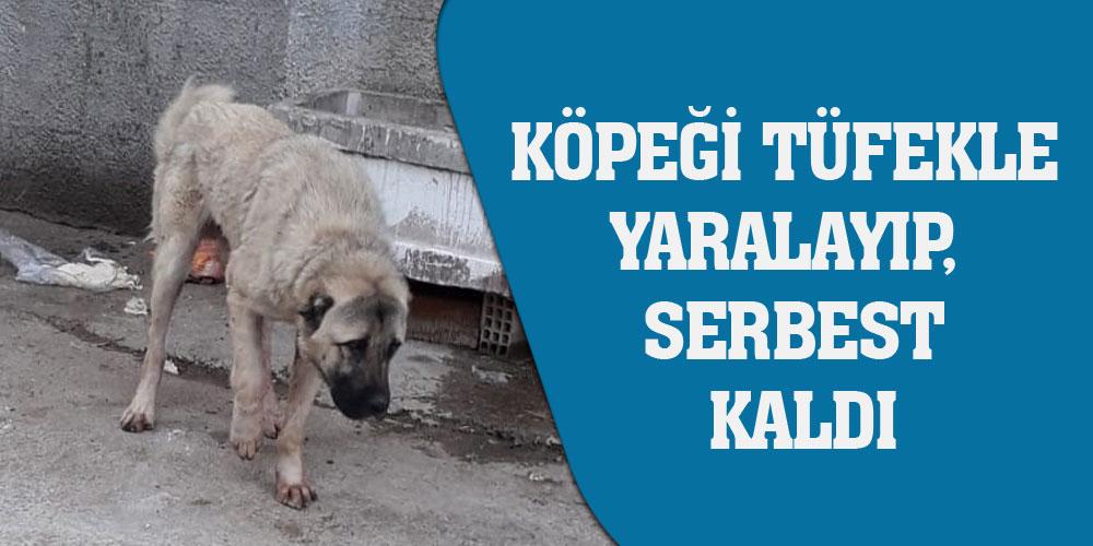 Köpeği tüfekle yaralayıp, serbest kaldı