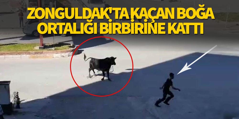 Zonguldak'ta kaçan boğa ortalığı birbirine kattı!